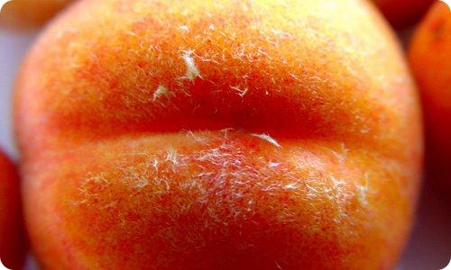 polza-fruktov-1