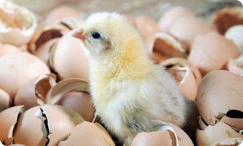 Чем заменить яйца вегетарианцу