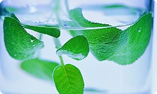 Лечение живой водой