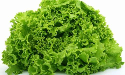 Польза листьев салата