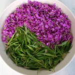 Полезные свойства и применение иван-чая