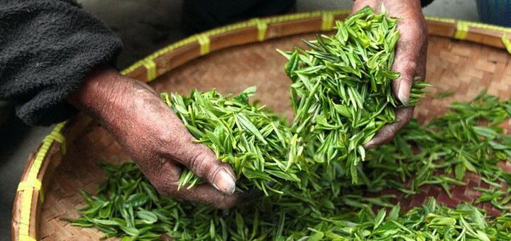 Состав монастырского чая для щитовидной железы